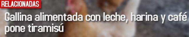 lnk_gallina_alimentada