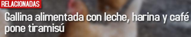 link_gallina_alimentada_tiramisu