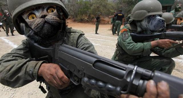 Perros y gatos tendrán que inscribirse en el Registro Militar