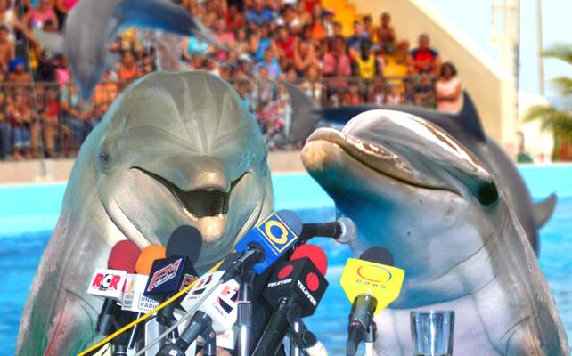 Delfines fundan partido y se lanzan a primarias presidenciales
