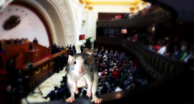 Rata que habita en el Hemiciclo decepcionada con pelea entre diputados