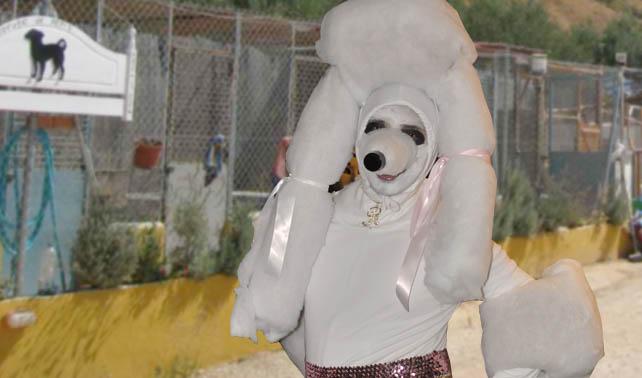 Indigente se disfraza de perro callejero para que sifrina de ONG lo adopte