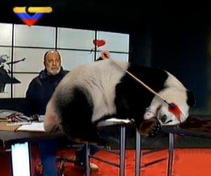 Mario Silva asesina oso panda en vivo para quitarle atención a Pérez Pirela