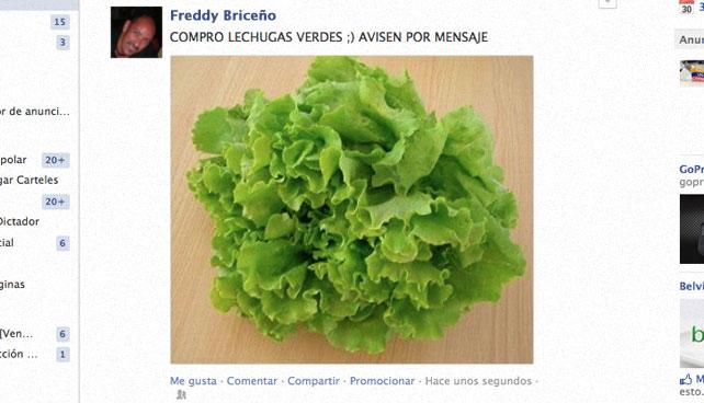 """Persona que pone en Facebook """"Compro lechugas verdes"""" realmente compra lechugas"""