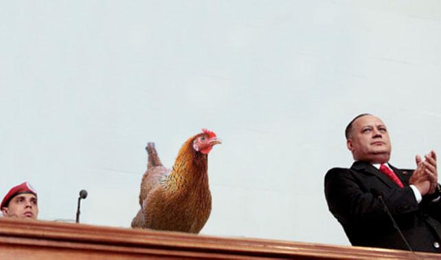 TSJ nombra a una gallina de Presidente solo por hincharle las pelotas a la oposición