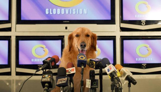 Dueños de Globovisión nombran a un Golden Retriever como director para salir de ese peo