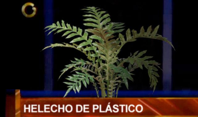 Nitu será sustituida por helecho de plástico