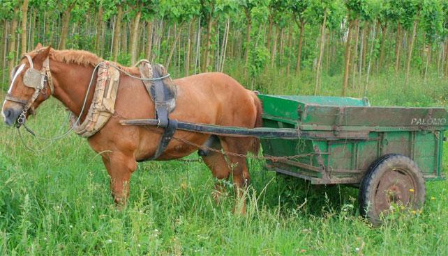Venezuela espera fabricar 50.000 carrozas a caballo para 2014
