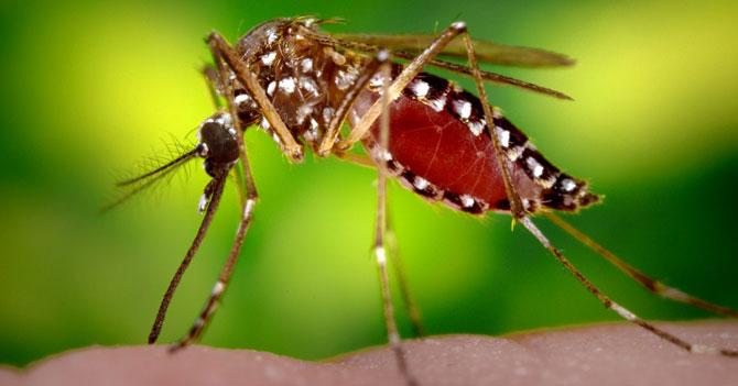 Llegada de Chikungunya a Venezuela rompe dependencia de virus imperialistas