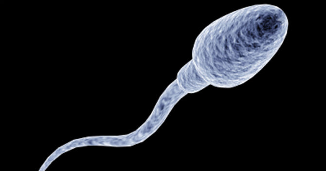 Espermatozoide desea con todas sus fuerzas no fecundar un ovulo en Venezuela