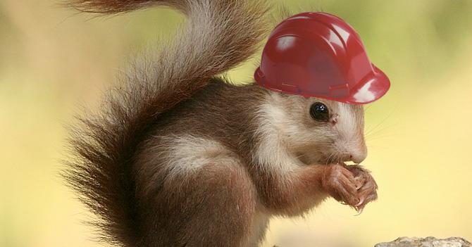 En Sidor todo está perfecto miren esta ardilla con casco :)