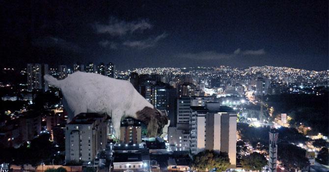 Descubren chivo gigante que por las noches se come el país