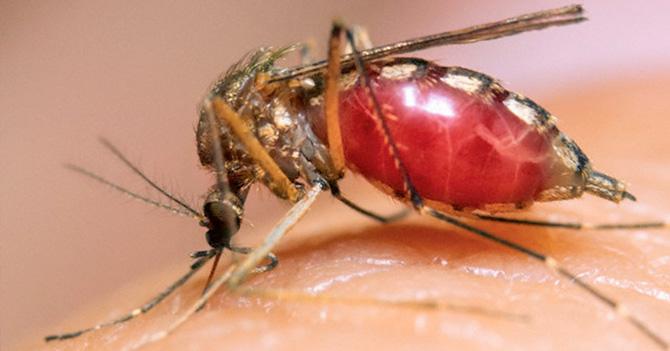 Si todavía no te ha dado Chikungunya, espera unos días