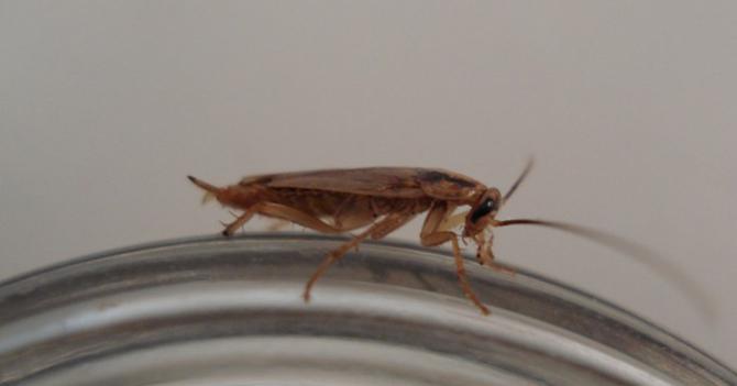 Cucaracha chiquita arrecha tras ser confundida con chiripa