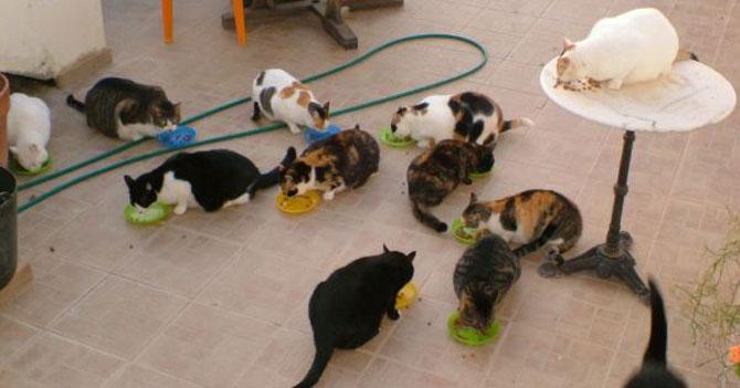 20 gatos se ponen de acuerdo para decirle a su dueña que busque marido