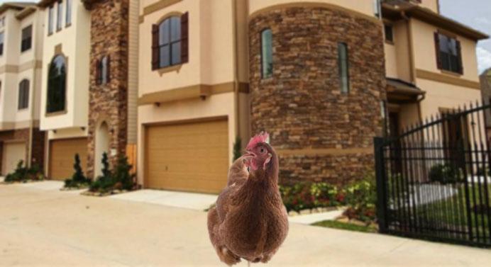 Luego de vender sus huevos, gallina compra quinta de 3 pisos