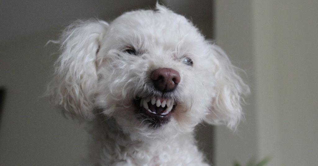 Toque de diana molestó a perro nini