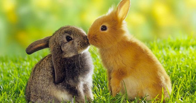 Si estás cansado de leer malas noticias, mira estas fotos de animalitos