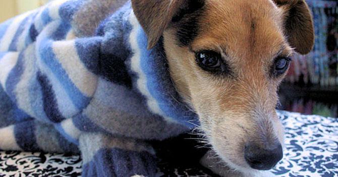 """Perro maracucho con suéter aprende a hablar sólo para decir """"Mátenme"""""""