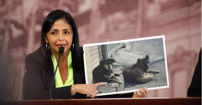 """Delcy Rodríguez: """"Venezuela es el único país del mundo con perros callejeros de pedigree"""""""