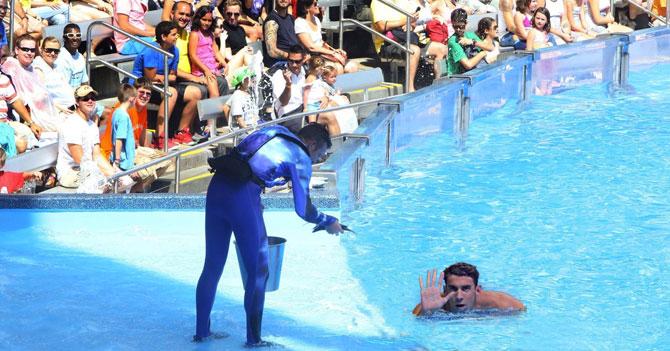 Sea World estrenará exhibición de Michael Phelps en su ambiente natural