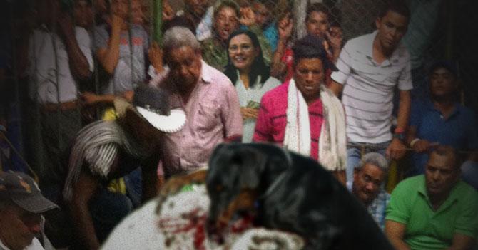 Rectora Socorro Hernández le apuesta $5000 al Rottweiler