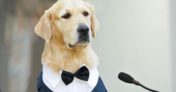 Perros molestos por poca representación en los Premios Óscar