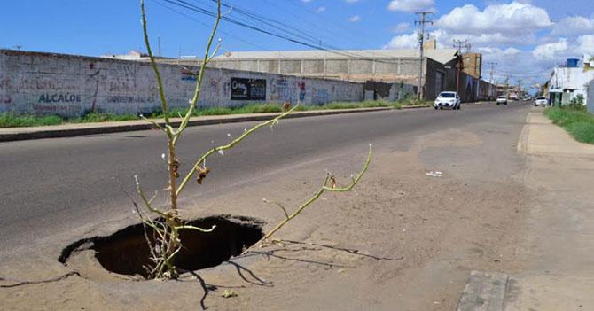 Gobierno invierte 75 millardos en ramas para tapar huecos