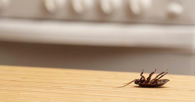 Científicos descubren que ni siquiera las cucarachas son capaces de sobrevivir al chavismo