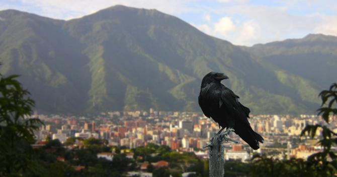 Internet de Venezuela obliga a ciudadanos a comunicarse con cuervos de Game of Thrones