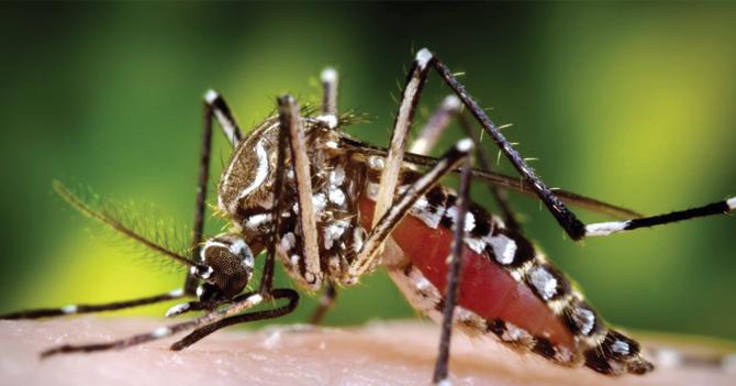 Mosquito del dengue huye de Venezuela por insalubridad en sus aguas