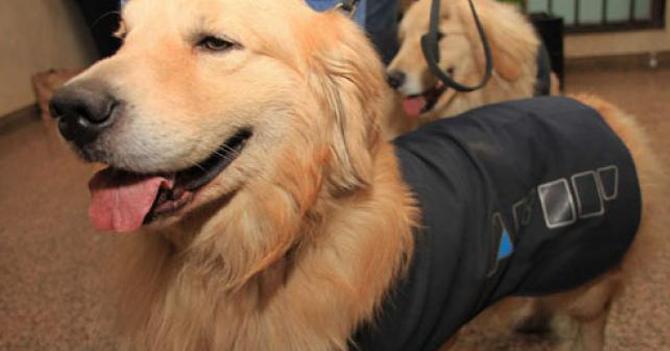 Perro antidrogas lleva 2 años arrebatado