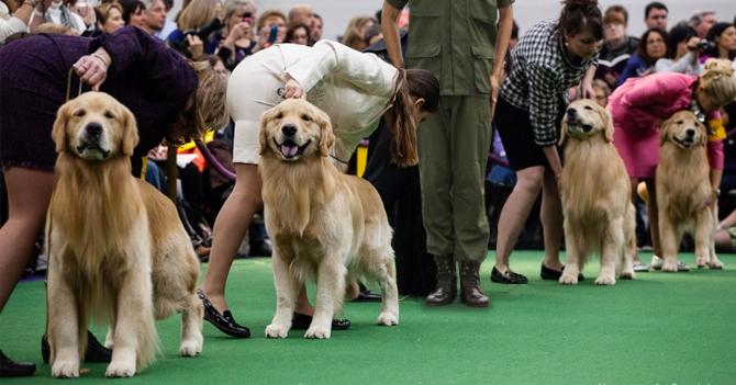 Militar venezolano gana concurso de pedigree canino