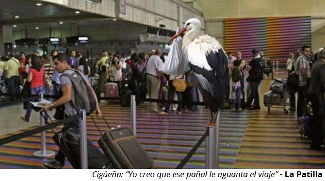 Cigüeña que lleva bebé a Venezuela lo deja de una vez en Maiquetía