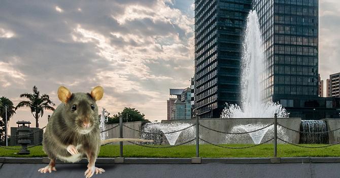 Rata termina siendo el único ser vivo que no se enchufó del país