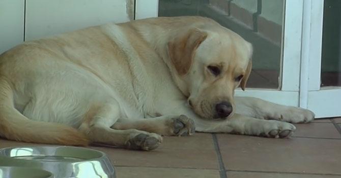 Perro de Guaidó se rehúsa a salir a pasear con él por miedo a que se lo lleve el SEBIN