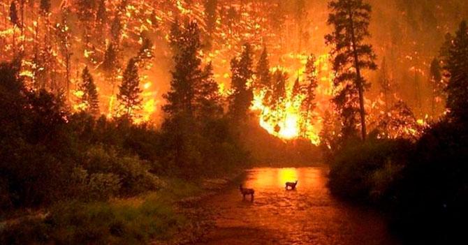 Tuiteros cancelan incendio en el Amazonas
