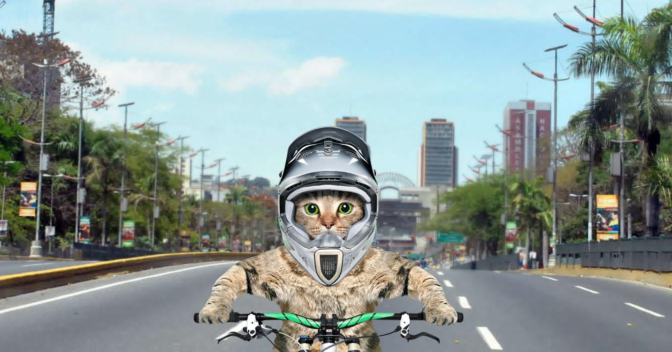 Gato consigue trabajo como delivery para no tener que ver a sus dueños