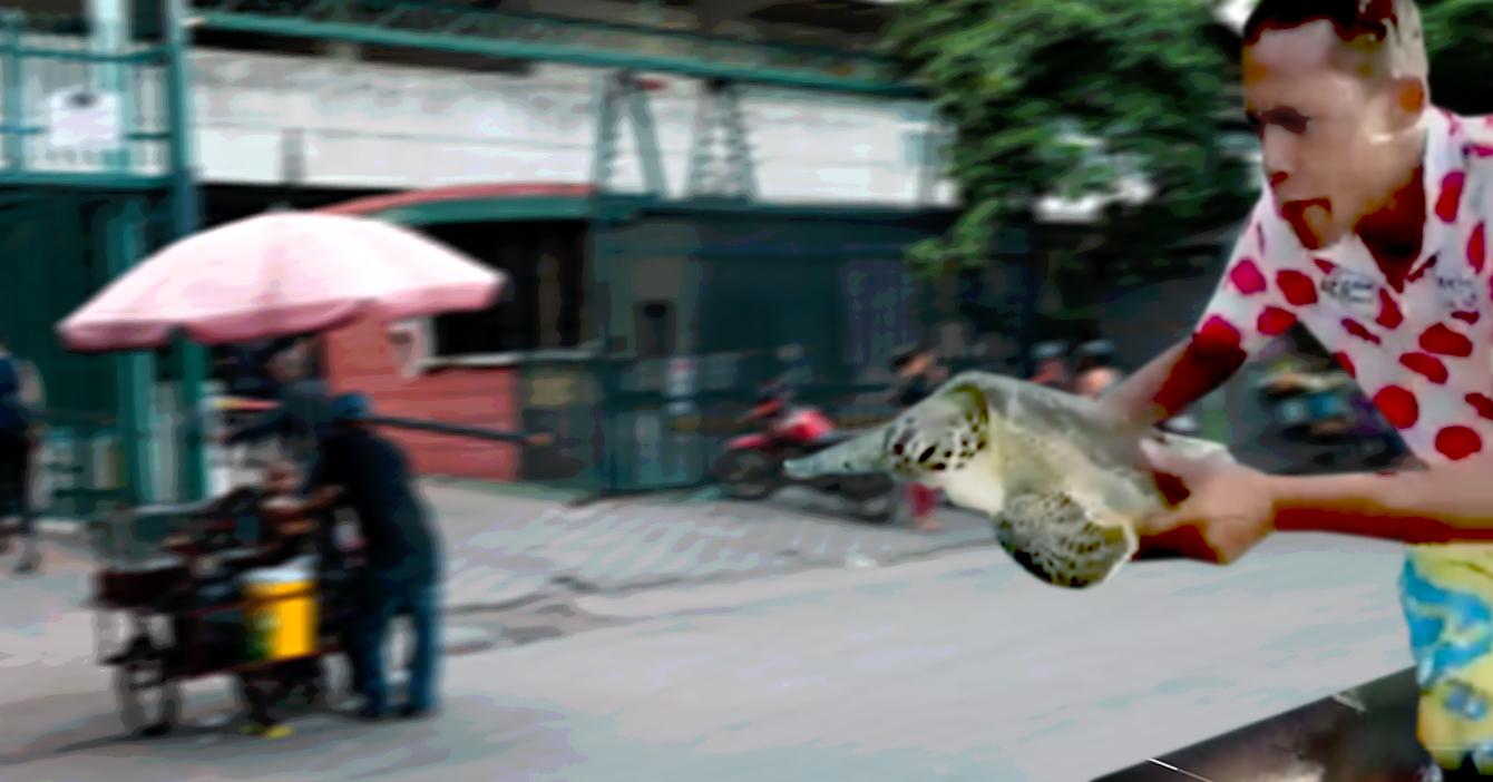 Tortuga Carey es liberada en Propatria