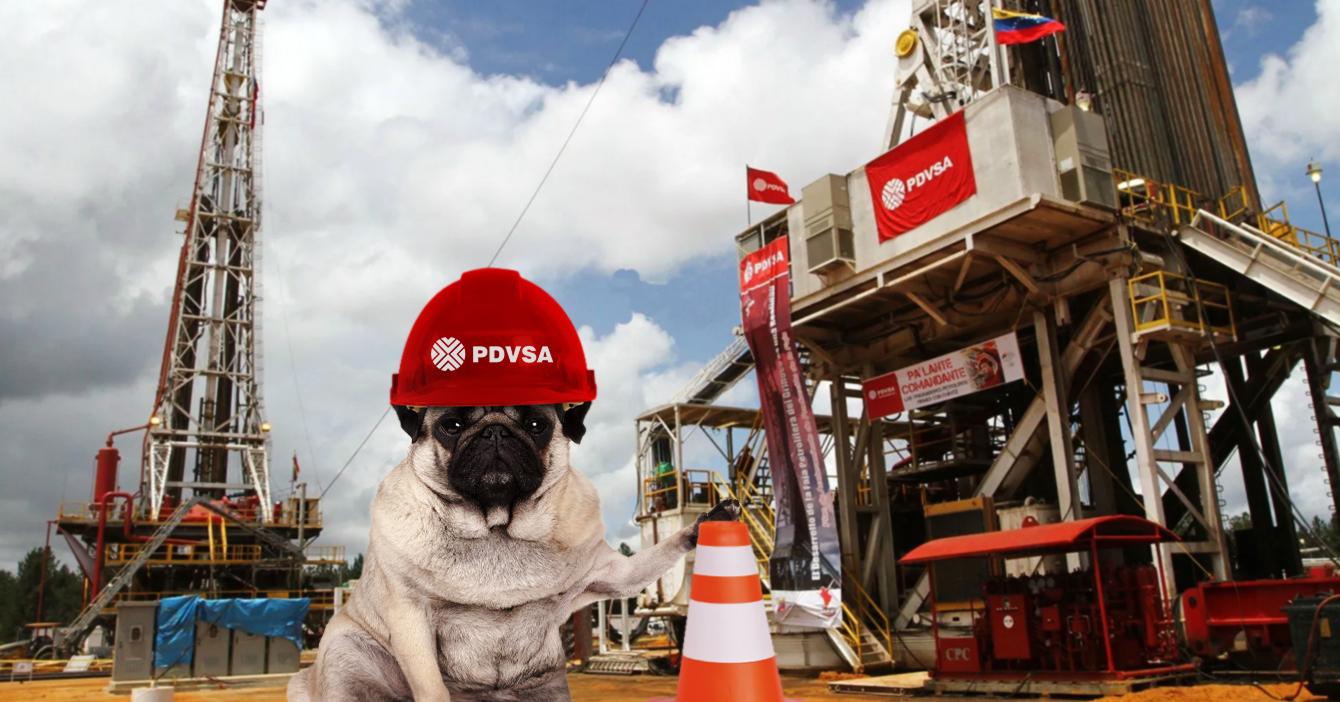 Perro ingeniero feliz de comenzar su primer día de trabajo en PDVSA