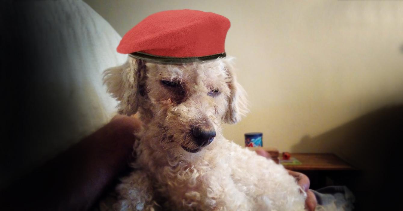Señora se niega a encariñarse con perro que tiene pasado chavista