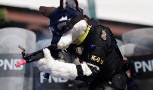 PNB incorpora furrys a la unidad canina