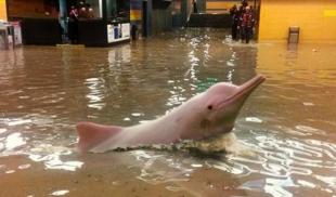 Fuertes lluvias permiten que toninas vuelvan a su hábitat natural en el Metro de Caracas