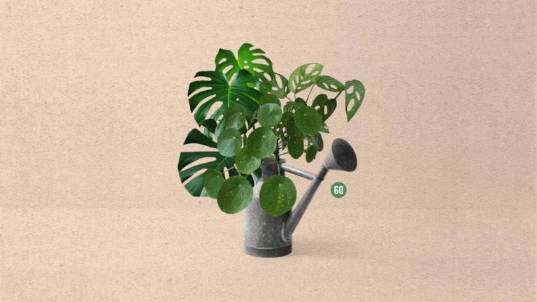 60 | ¿Por qué estamos obsesionados con las plantas? | El Cuartico